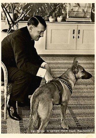 http://stanislav-dogs.at.ua/_ph/5/2/740136502.jpg